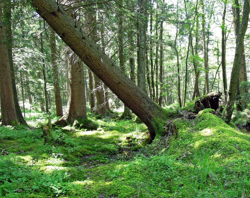 forestry-188305_1280-1
